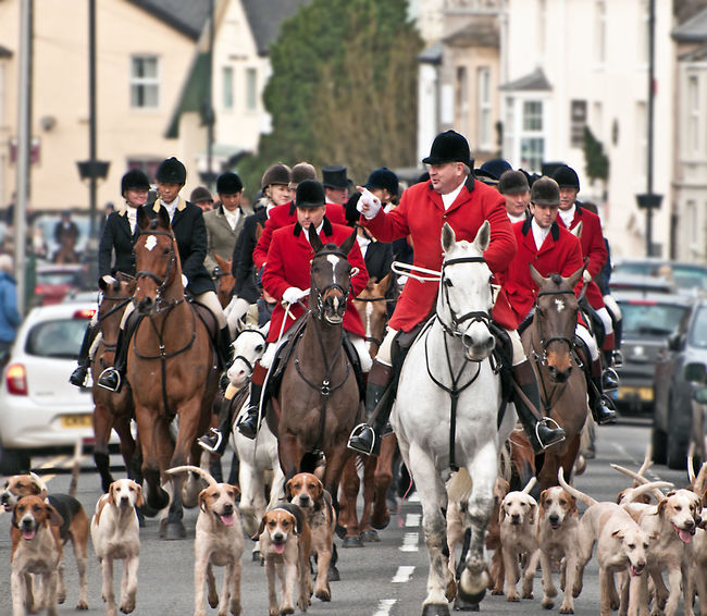 Animal Head  Boxingdayhunt Country Country Life Cowbridge DECEMBER2015 Eye Em Best Shots Eye4photography  EyeEm EyeEm Best Shots EyeEm Gallery From My Point Of View Horses Hunting Livestock Nikonphotography Photography Recreational Pursuit Showcase: December Wales Decemberphotochallenge