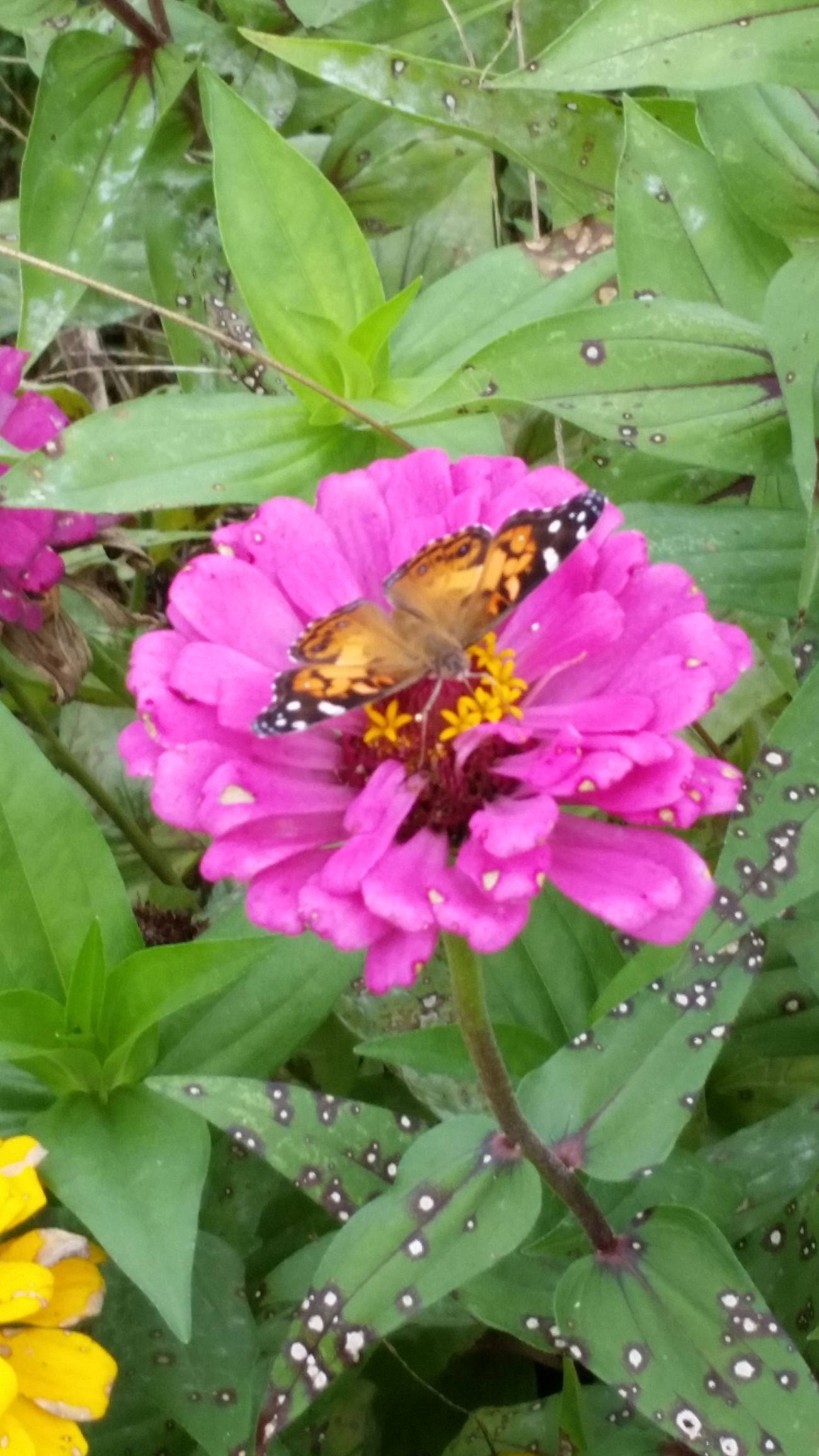 Butterfly Pitstop Butterfly Ujustgotkaied Nature Flowers Petals Bright