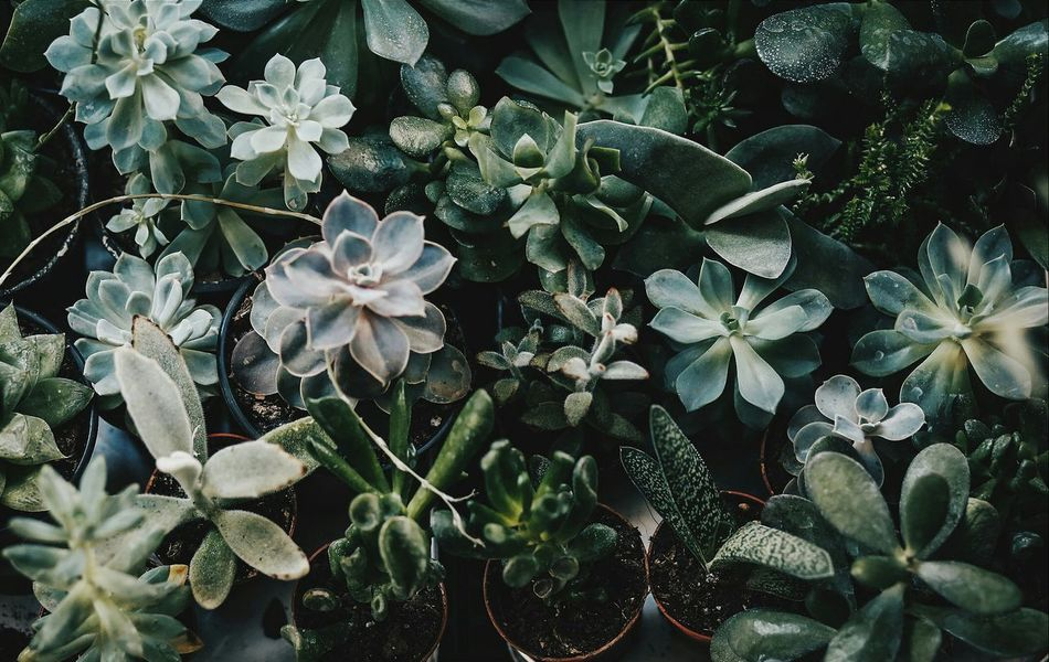 Beautiful stock photos of garden,  Beauty In Nature,  Blooming,  Blue,  Botany