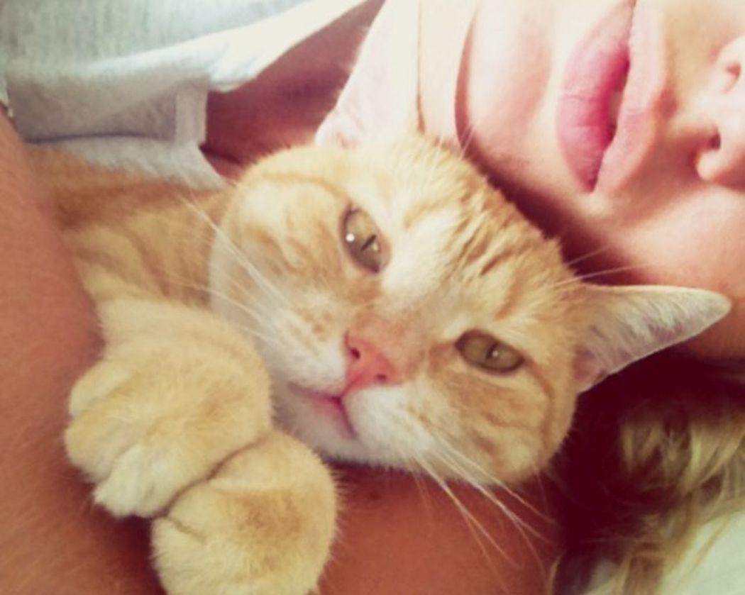 Tigerlou Cat Home Love Enjoying Life Taking Photos Lips Hello World Tired Animals
