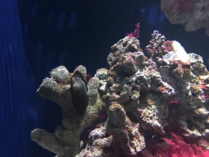 Underwater Sea Life Water UnderSea Coral Nature No People Animal Wildlife Indoors  Sea Animal Themes Animals In The Wild Close-up Beauty In Nature Day