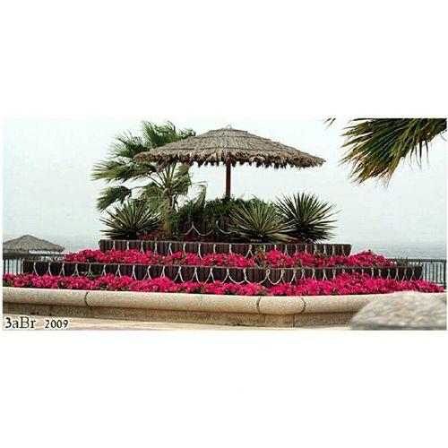 كرنيش الفناتير الجبيل الصناعية المملكة العربية السعودية كانون 50d زهور Corniche Fanateer Jubail Saudi Arabia Canon 50D x3abrr rose