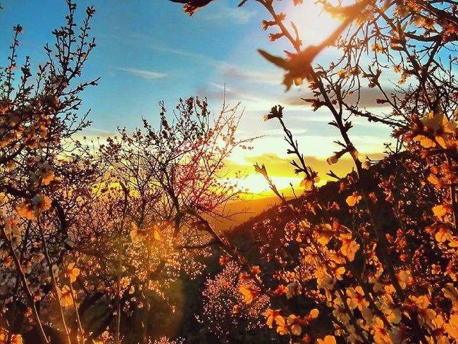 Rojizos de la Alpujarra