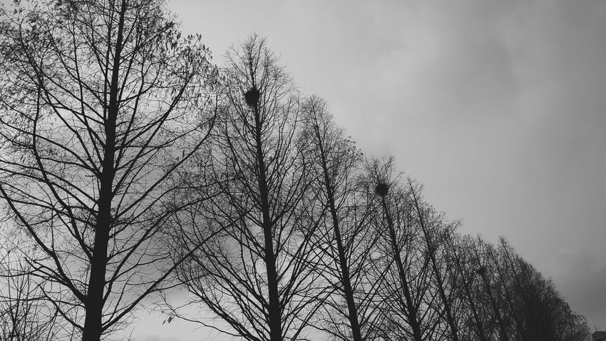 Black & White Photography Relaxing Blackandwhite Daily Life One Day Silent Forest On The Road Walking Around Melancholy