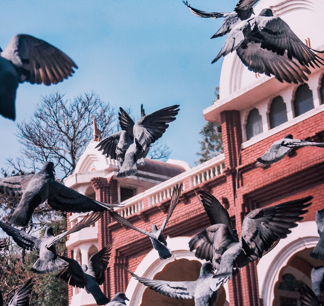 Bird Animals In The Wild Animal Themes Flying Spread Wings Flock Of Birds Animal Wildlife Low Angle View Outdoors Day Sky Nature No People Large Group Of Animals Architecture Vulture Pelican Bird Of Prey Resist Pigeon India Culture EyeEmNewHere Break The Mold Art Is Everywhere TCPM