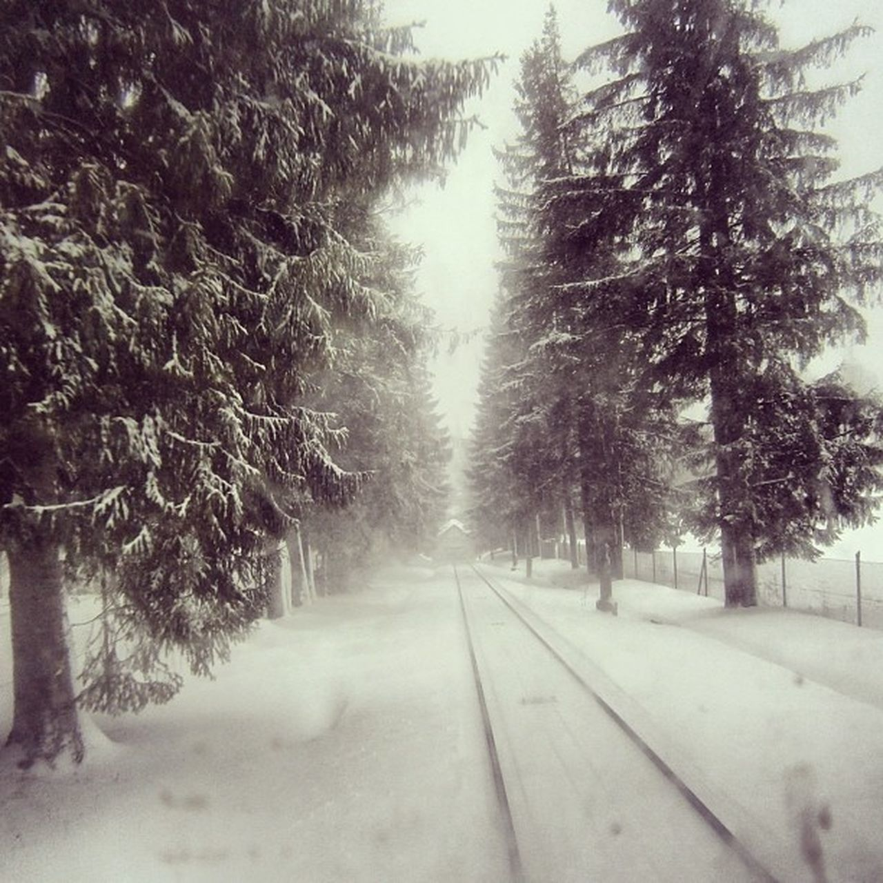 winter, cold temperature, snow, tree, weather, nature, transportation, railroad track, no people, rail transportation, beauty in nature, outdoors, day, landscape, scenics, forest, snowing, sky