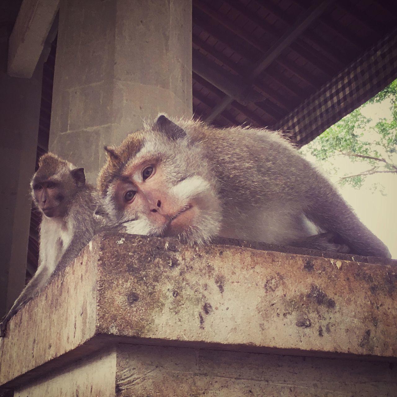 Bali Holy Lazy Lazy Day Monkey Temple Monkeys Temple Ubud