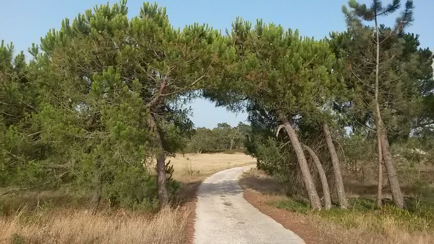 The Way Forward Nature Tree Road Natural Gate Country Life Country Holidays Portugal Alentejo,Portugal