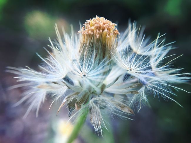 In The Wild Dust In The Wind Grass Nature Plant Leaf Outdoors Flowers,Plants & Garden Grassflowers Beauty In Nature