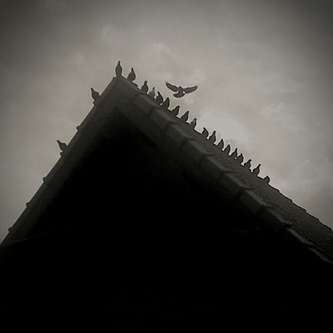 Low angle view photo of a group of birds at the top of house roof Birds Group Of Birds Samsungphotography Animals Montevideo Uruguay House Roof Blackandwhite Myfavoritephoto My Favorite Photo