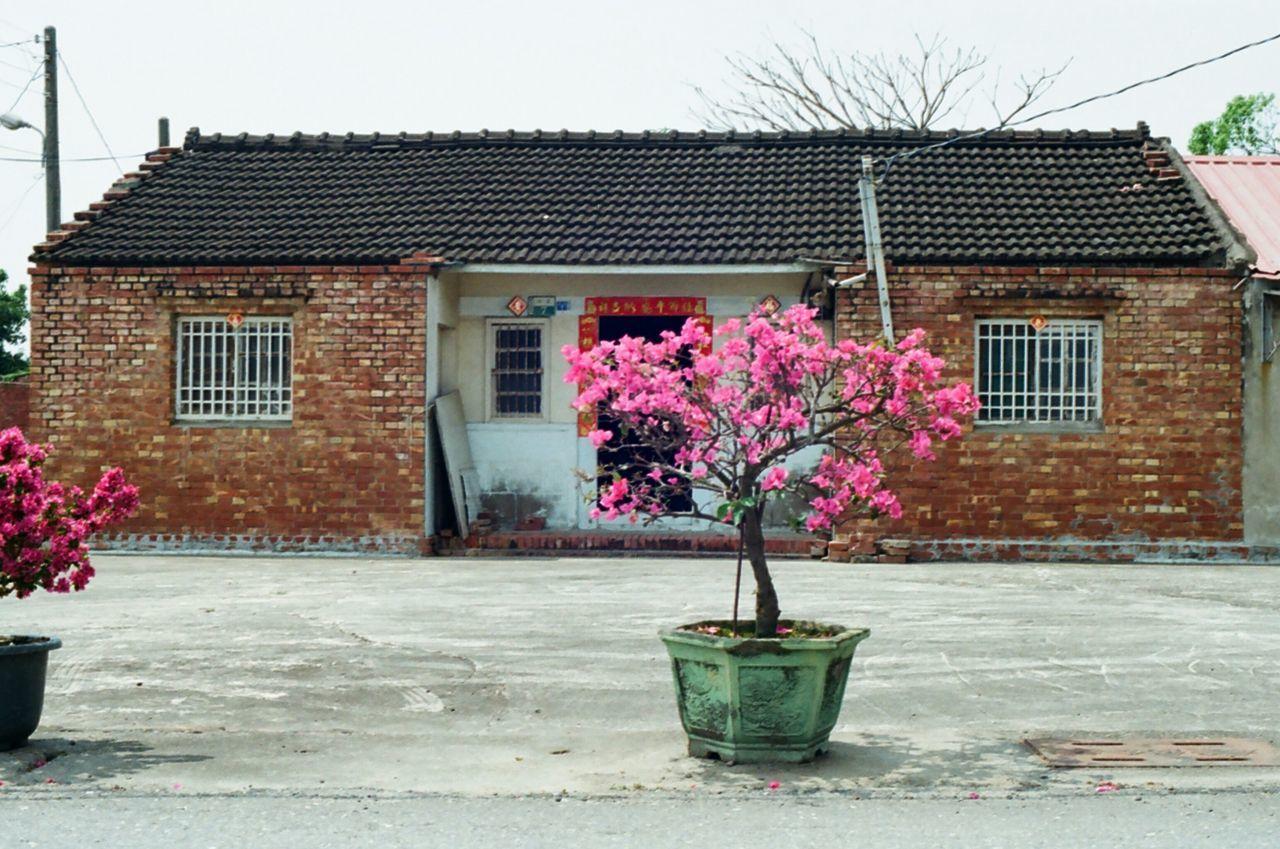 フィルム Showcase April Springtime Season  Plant Pink Flower Pink Color 菲林 Petal Film Photography In Bloom Film Is Not Dead Blooming Olympus Om10 Countryside Country House Fragility Up Close Street Photography Telling Stories Differently Yield