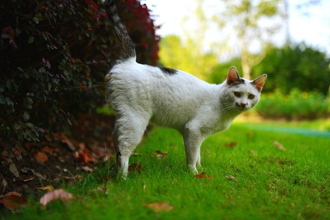 Animals Cat Street Photography Cats Cat♡ Top Secret Mission Urine Figurine  Lovely Funny 别拍我撒尿