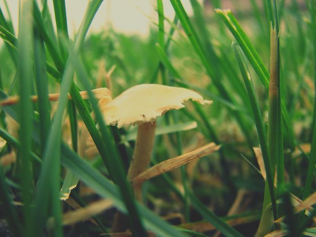 Carve your corner. After The Rain Mushroom Beauty In Nature Underbrush Grass Macro Taking Photos Canon Champignon Nature Fungus