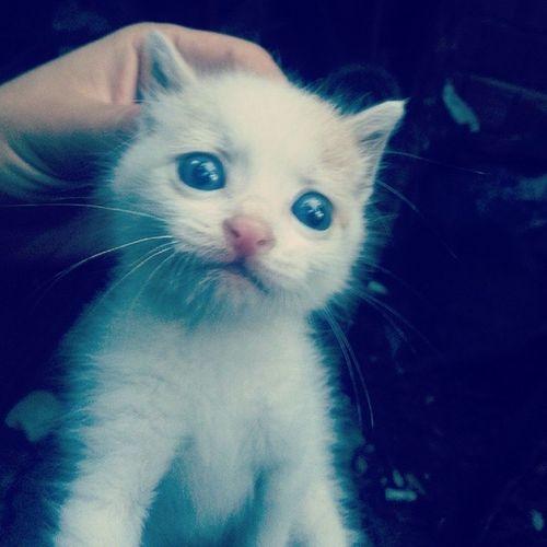 Mavigozler Kedi :))