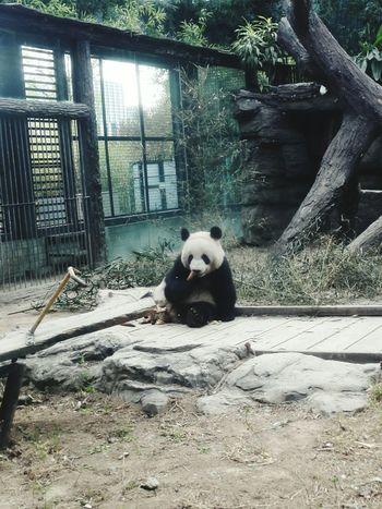 귀여운 팬더.. Panda