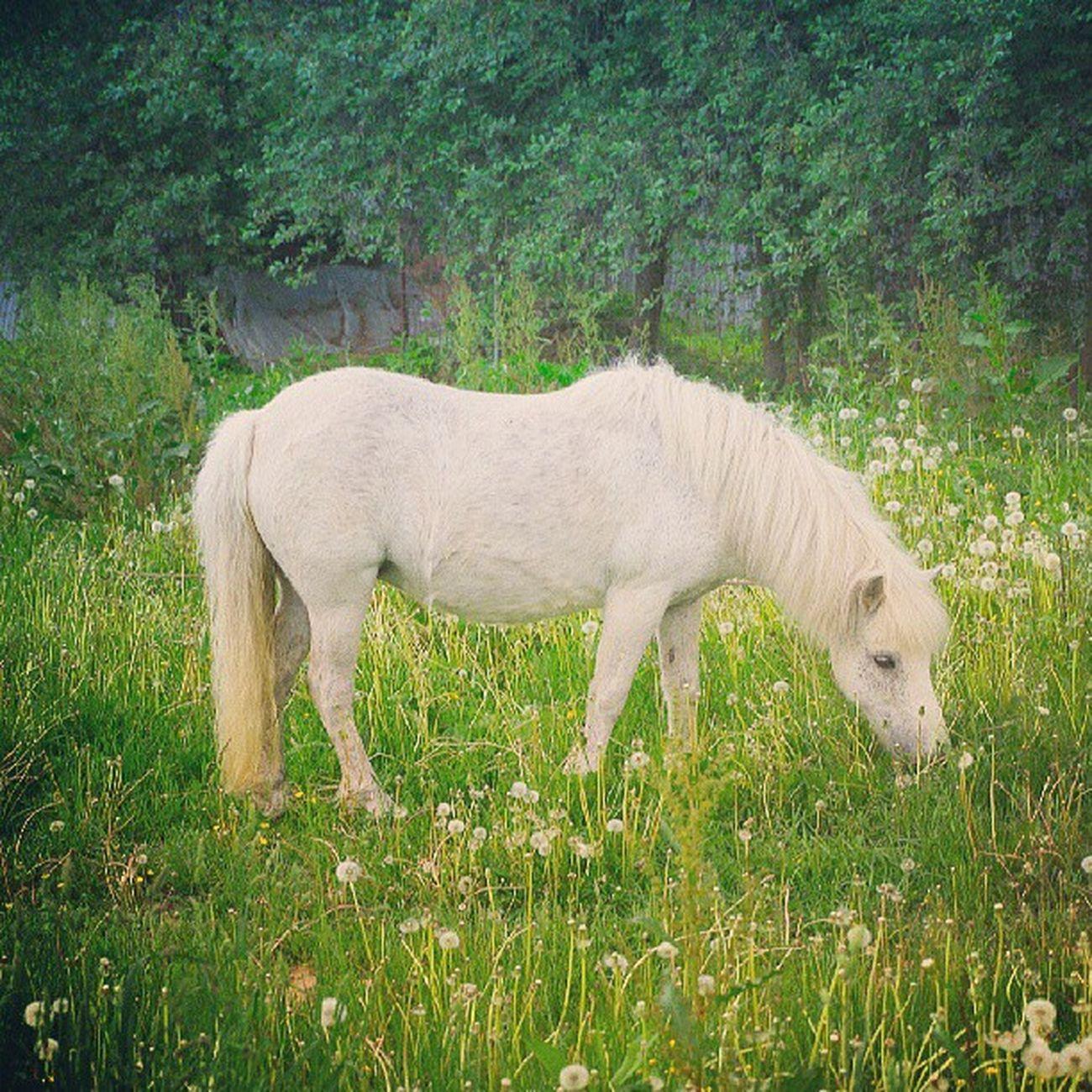 Малиновка Horse Minsk Cityminsk Minskcitylife whitehorse summer instamood