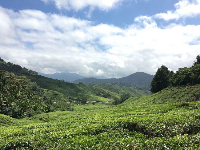 Tea valley Malaysia Cameronhighlands
