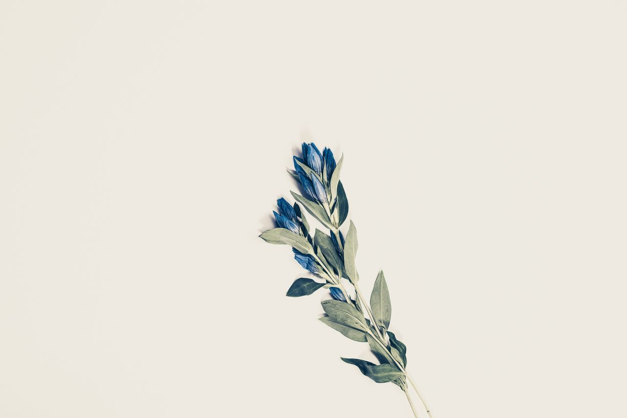 copy space, studio shot, white background, plant, growth, nature, no people, fragility, flower, close-up, beauty in nature, clear sky, freshness, flower head, outdoors, day