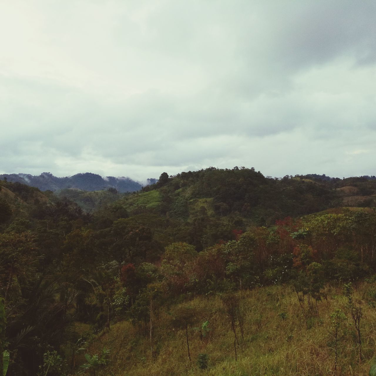 nature, landscape, no people, beauty in nature, tranquility, mountain, sky, tree, scenics, growth, forest, outdoors, day