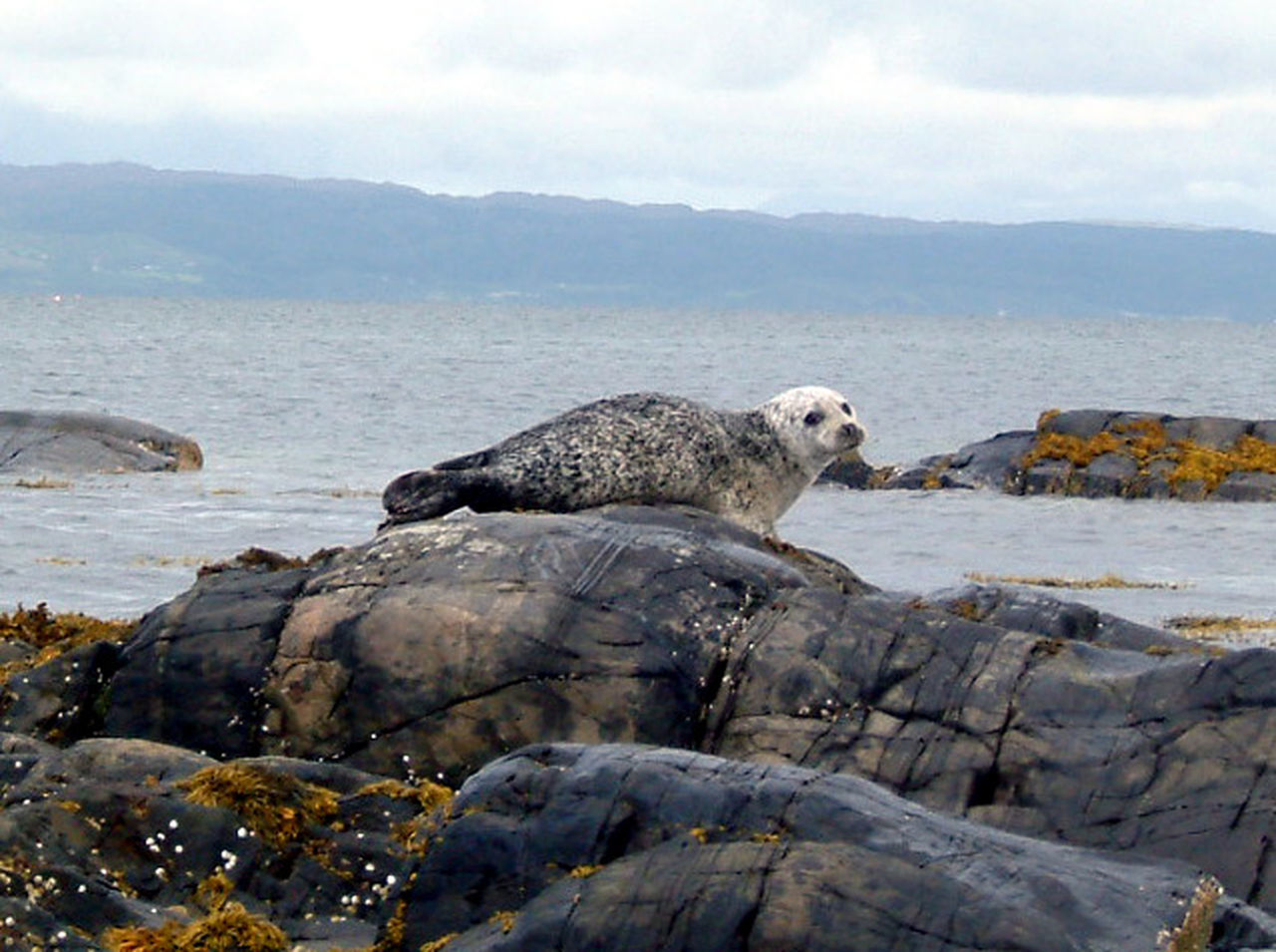 Seal Baby Seal Wildlife Nature Nature's Diversities