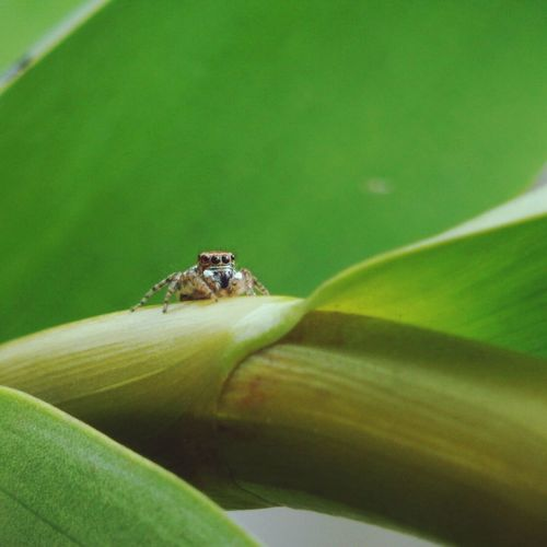 Leone Filter  EyeEm Nature Lover Nature_collection Spider