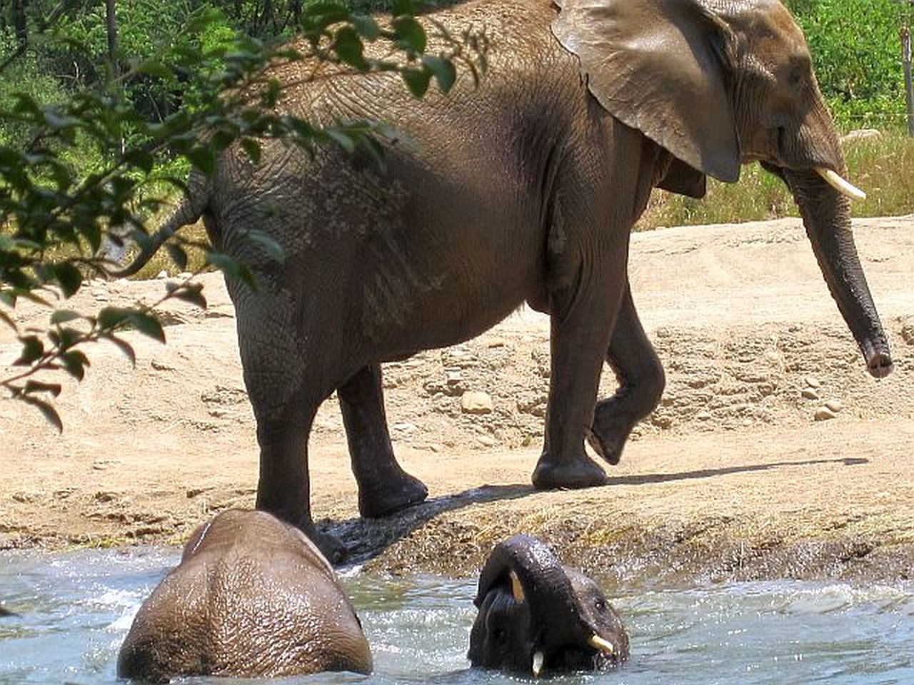Elephants playing in water Animals In The Wild Animal Wildlife Elephant Animal Themes Mammal Nature One Animal Outdoors Safari Animals No People Water Sand Day Animal Trunk African Elephant Tusk Close-up