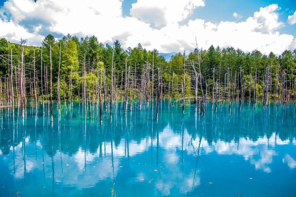 北海道 美瑛 青い池 反射 Hokkaido Biei Blue Pond Sky Sky And Clouds Cloud Clouds Reflection Reflections
