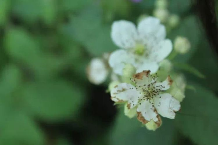 .... Eyem Nature Lovers  White Flowers Beautiful Nature Theme