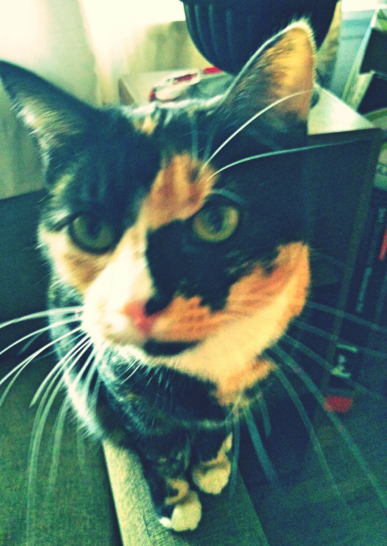Patches.. Photo WorldView Patchy Picoftheday Januaryphotochallenge Showcase: January Petstagram Catlover Patchesthecat 2016 Catsofinstgram Catstar #cat #catnap #catoftheday #catpic #catlovers #catsconnect #catinstagram #catsofinstagram #gato #gatinhos #gatto #garfield #petstagram #premierpet #photooftheday #petsofinstagram #picoftheday #petlovers #instabicho #ilovecats #ilovemypet #issovici Animallovers Cats Of EyeEm Catsoftheworld EyeEm Cats