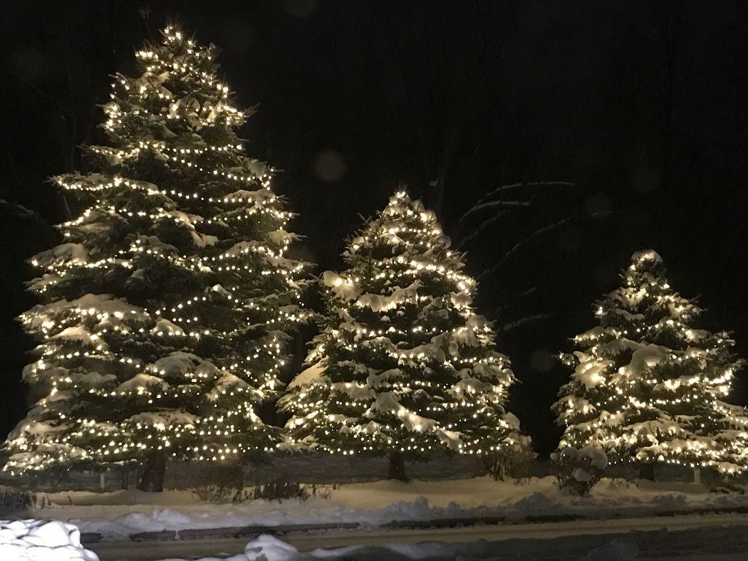 Trinity. Christmas Decoration Illuminated Tree Winter Christmas Lights Tradition Celebration Christmas Tree No People Cold Temperature
