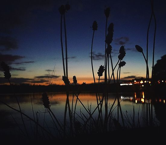 Silhouette Lake Sunset Reflection Nature Water Beauty In Nature Scenics Tranquility Tranquil Scene Sky Outdoors No People Growth Plant Tree Flower Day EyeEmNewHere EyeEm Selects Horizon Over Water Tree Waterfront Tranquility Beauty In Nature Lost In The Landscape