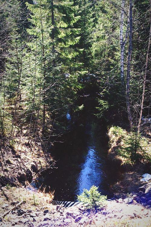 Spring Into Spring a small creek