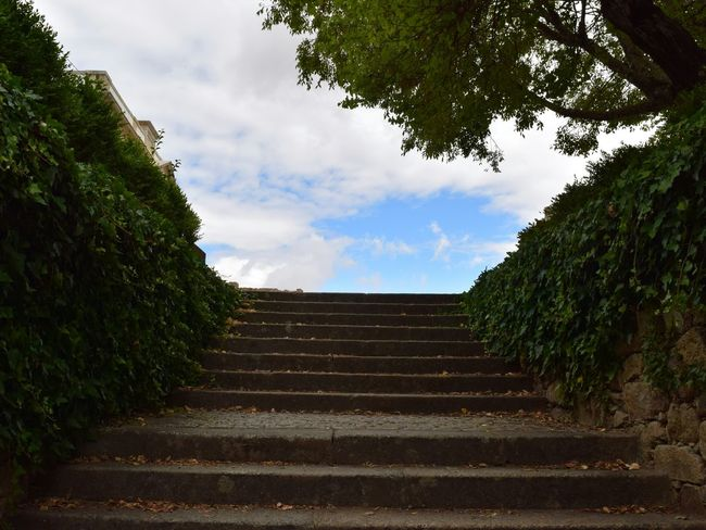 Steps Sky Steps And Staircases Castelo BrancoTree Portugal The Way Forward Outdoors Blue Day Stairway To Heaven