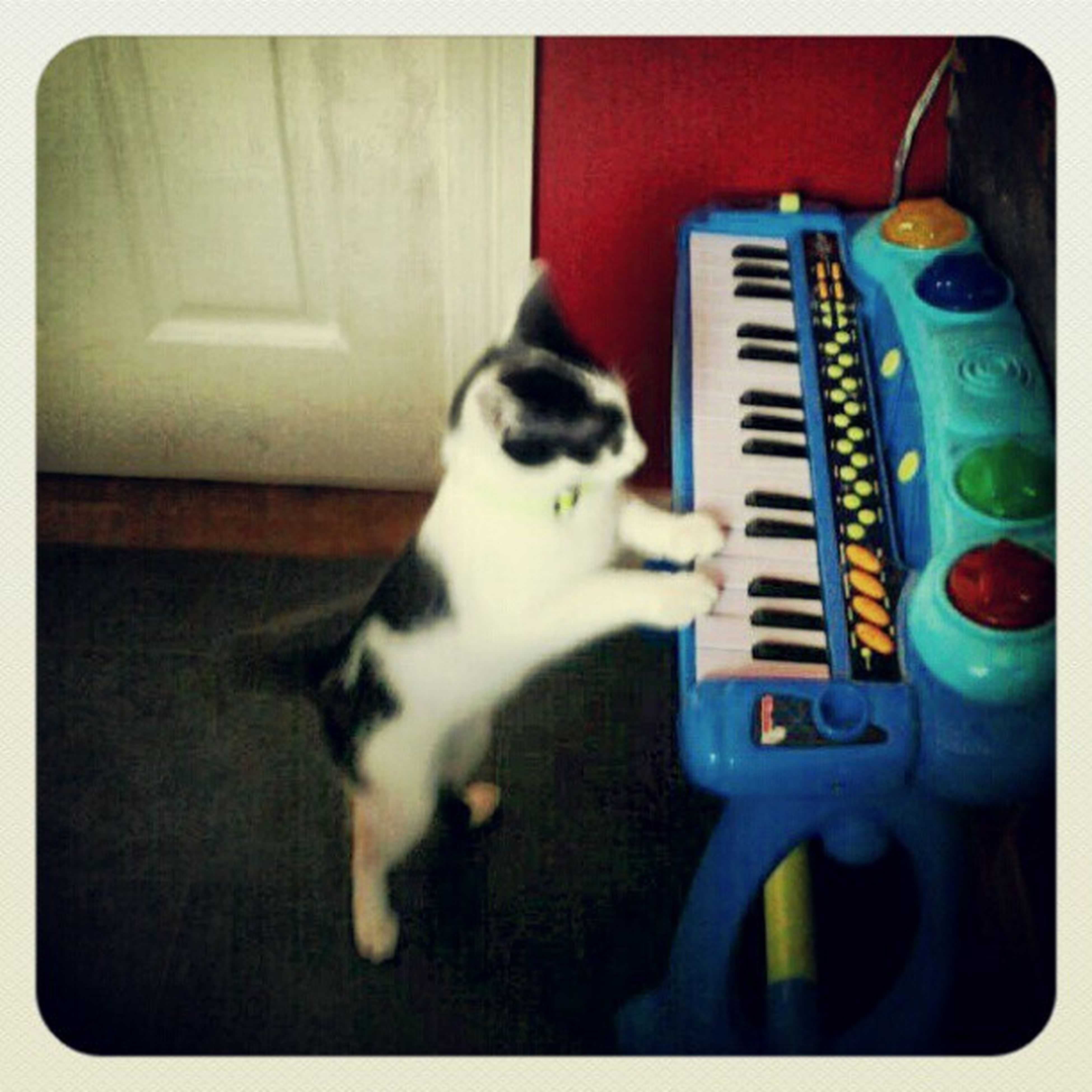 AsCatsDo Piano MusicalGenius Weirdcat