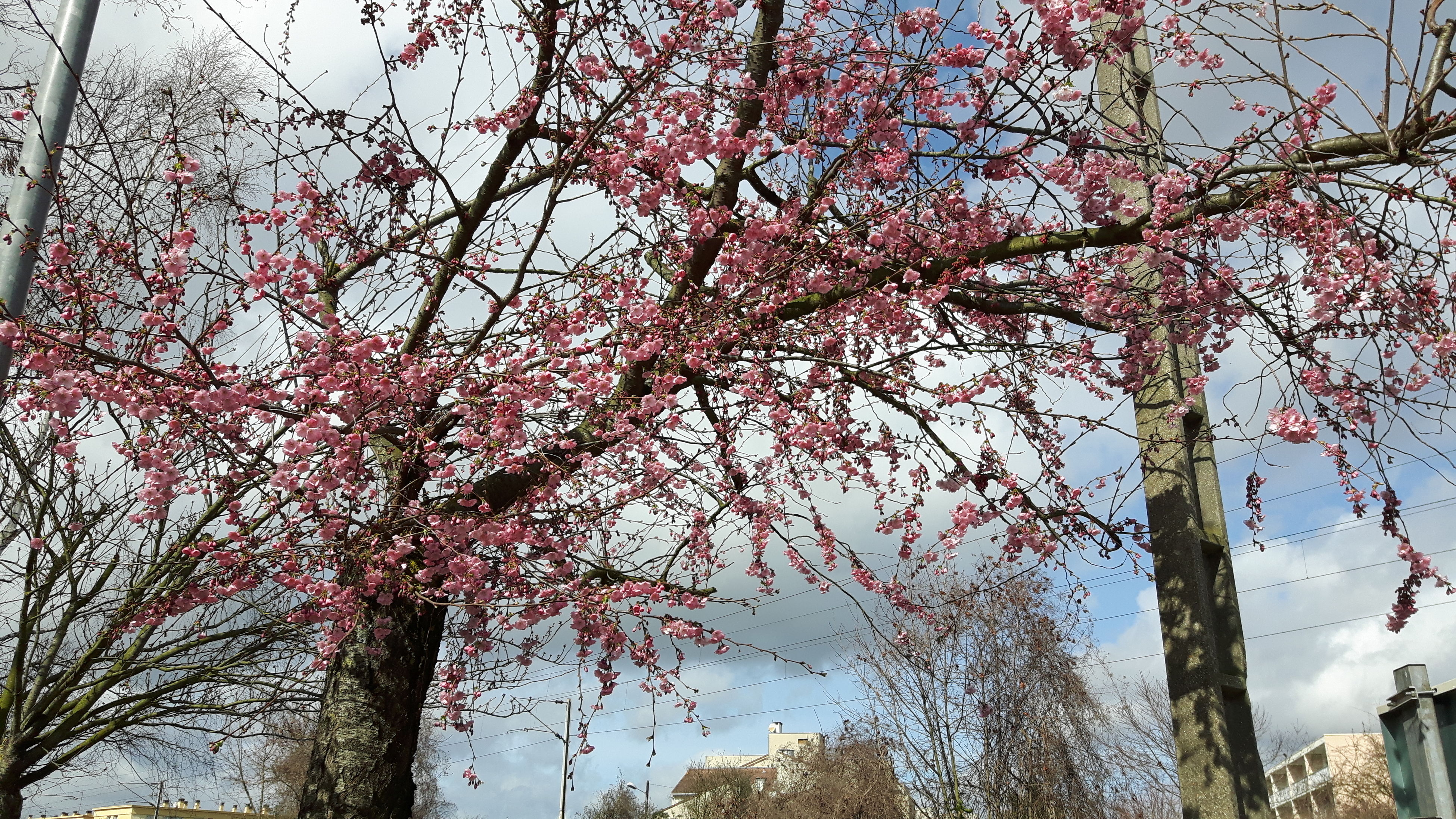 tree, branch, low angle view, growth, flower, built structure, architecture, nature, sky, building exterior, beauty in nature, pink color, day, blossom, freshness, tree trunk, no people, outdoors, cherry blossom, fragility