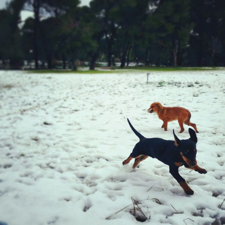 Performance Dogs Snowing Greece