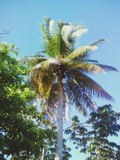 Relaxing Taking Photos Enjoying Life Nature Photography Nature Caribbean Life Coconut Trees
