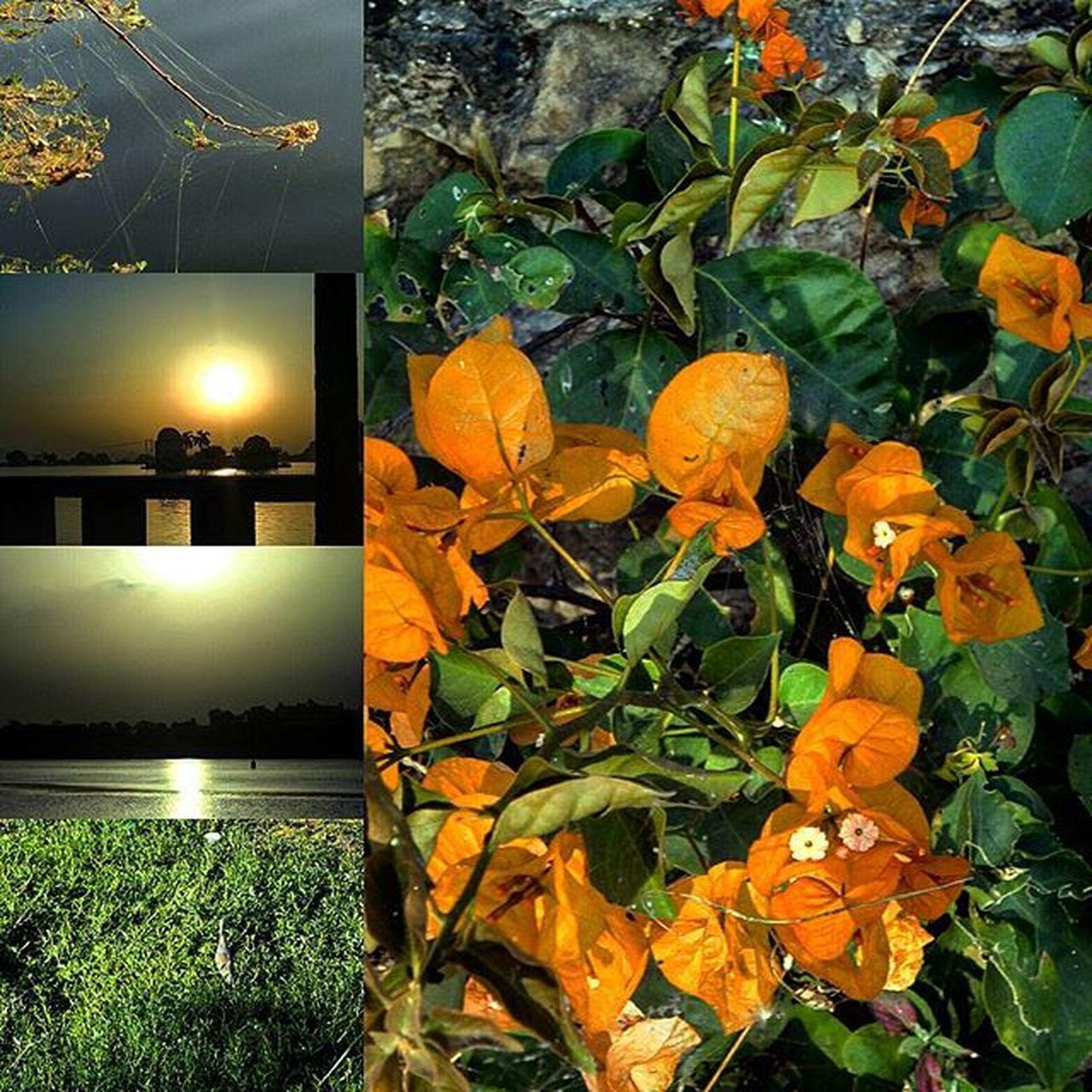 LAYOTS👌💞 Morning💜 Freshness Photography Photographer Unified Earlymorningride Presta InstaSanps Randomclicks Loveoflife UdaipurMorningsPhotoNumber_7 Udaipurlove Fatehsagar Energetic MyFirstSnapOfTheDay UdaipurDays .....😊😊😄😃