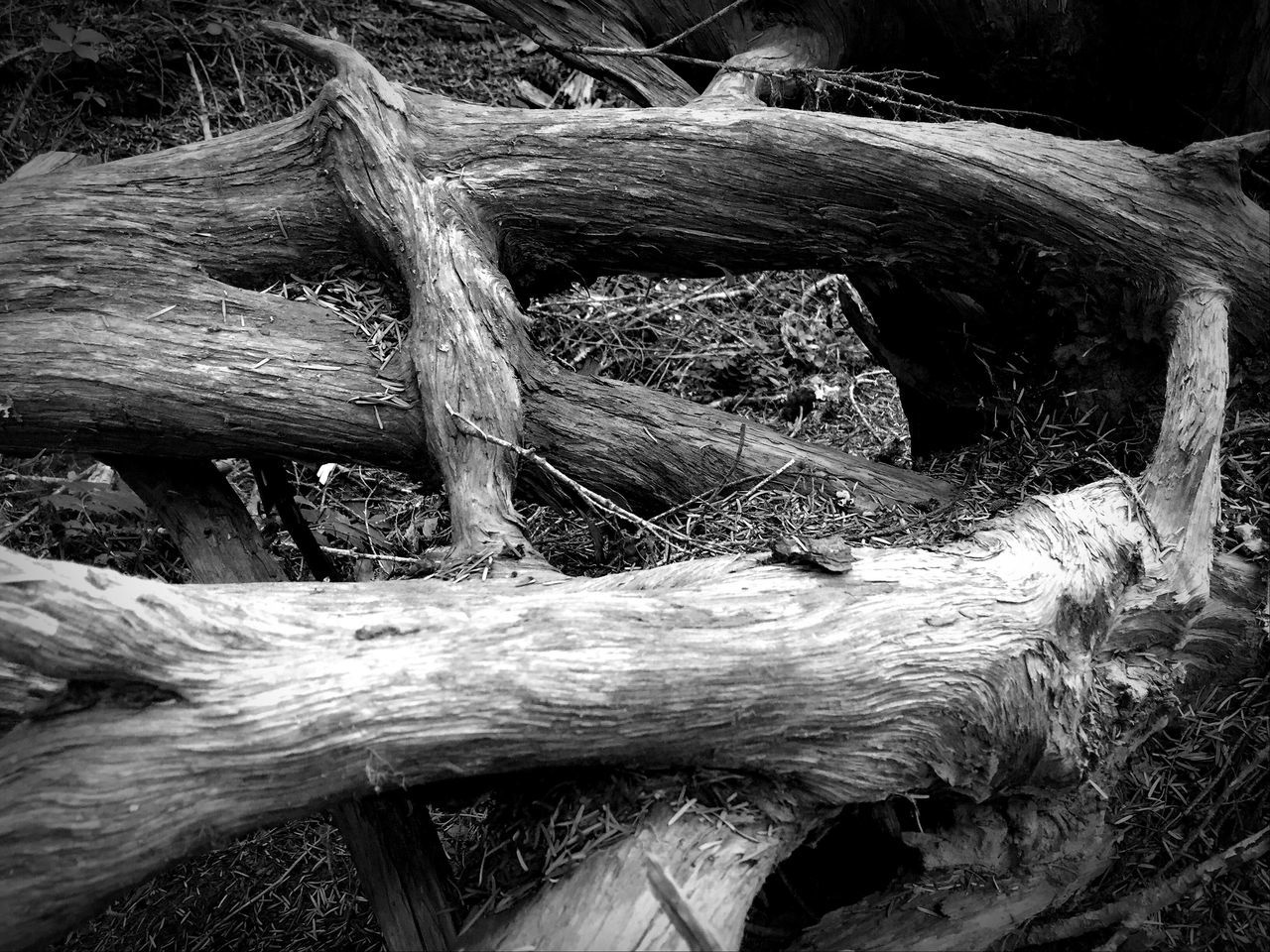 Black And White Still Life Tree Trunk Views Abstractions Old Tree Perspective Sculpture Shapes In Nature  Log Outdoors Textured  Fallen Tree Nature Beauty In Nature