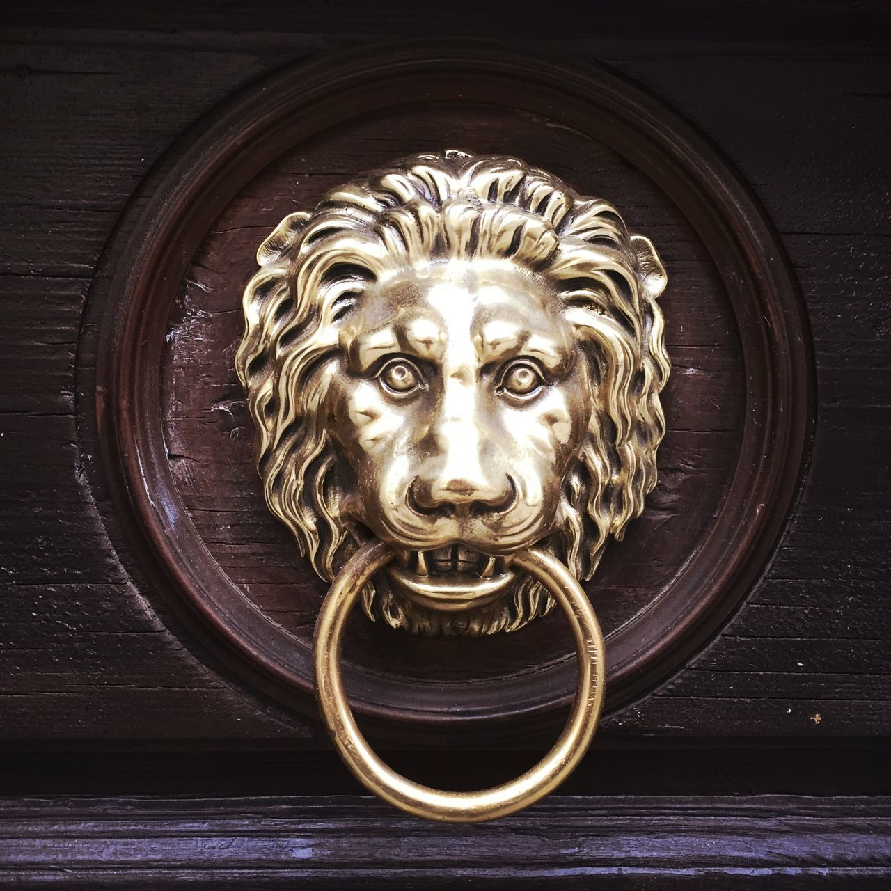 Lion Knocker Door Knocker Golden The Street Where We Live Urbanphotography