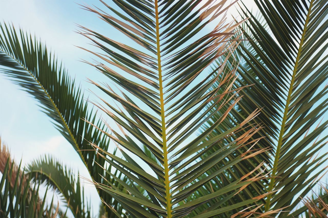 Be free like the wind be free like the palm leafs. Palm Tree Nature Tree Palm Leaf Beauty In Nature Day Growth Green Color Outdoors No People Sky Frond Leaf Close-up Clear Sky Freshness