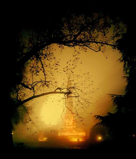 Silhouette Sunset Flying No People Tree Bird Water Outdoors Nature Sky Beauty In Nature Animal Themes Close-up Day Vercelli Piemonte Piemonte_super_pics Piemonteturismo Piemonte_city Piemonte_best_pics Piemont Piemonte👍🏻 Piemontexperience Notte