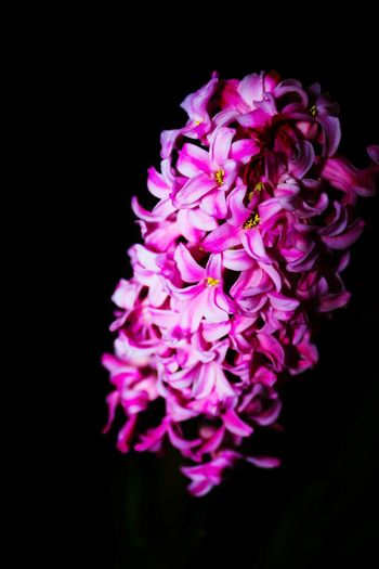 Hyacinth Showcase March Close-up Closeupshot Flowerporn Smellsgood Flower Beautiful Flowers Beauty In The Darkness