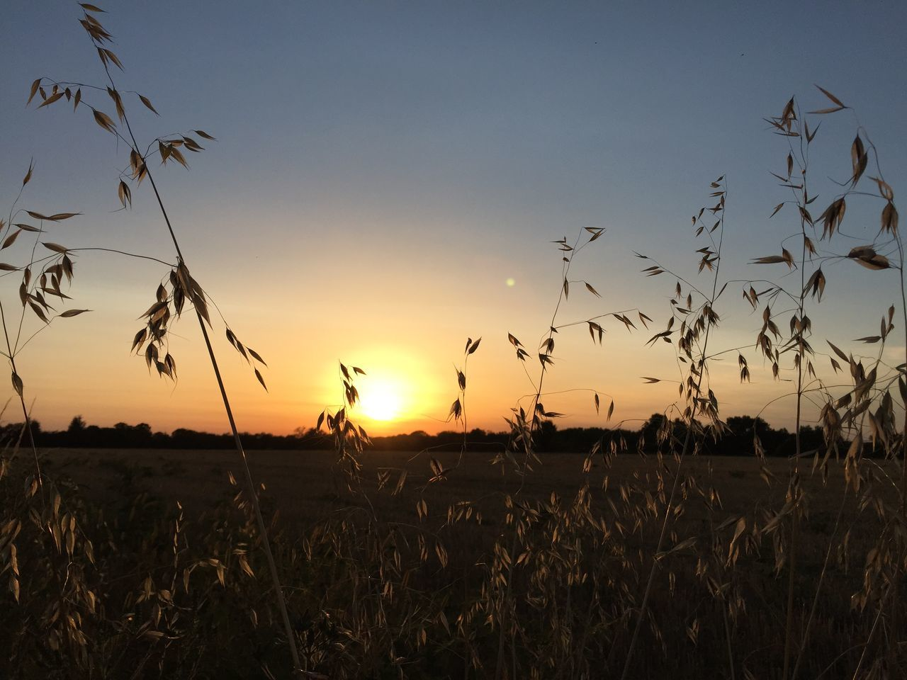 Crop Field Against Sunset Sky