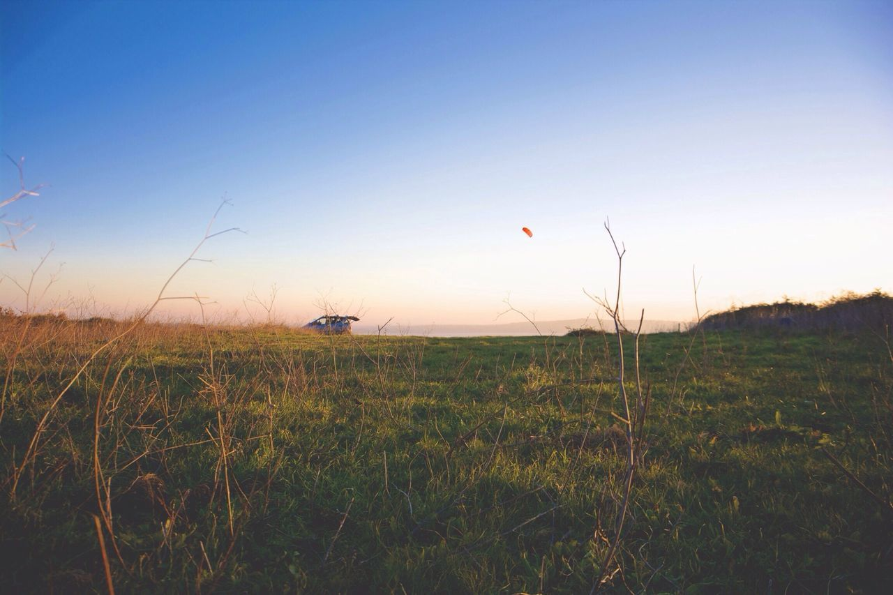 grass, field, nature, growth, tranquil scene, no people, sunset, beauty in nature, outdoors, tranquility, plant, scenics, sky, clear sky, day, tree