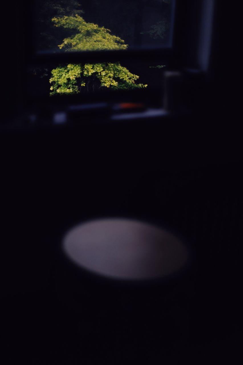 no people, close-up, indoors, night, illuminated, nature, black background