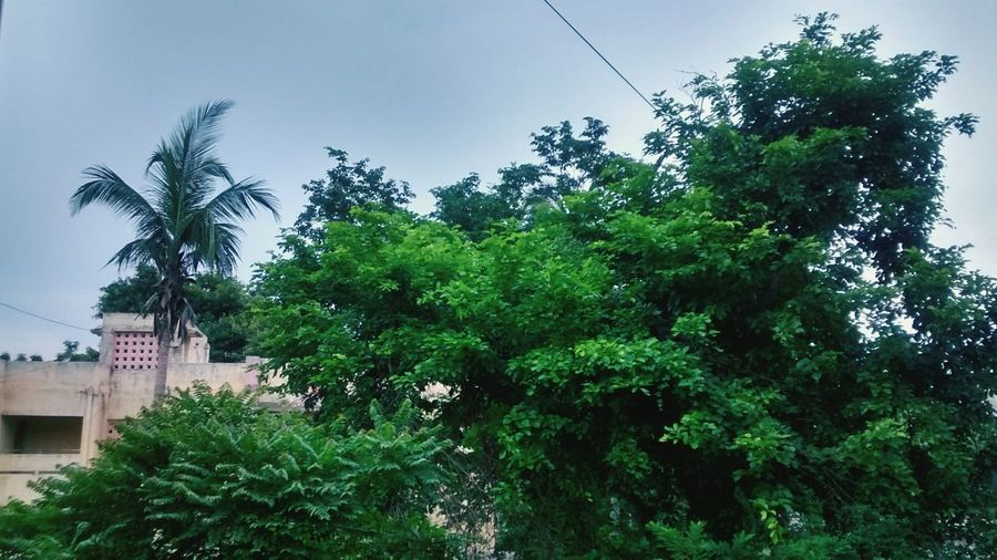 View from my window! Taking Photos Nature EyeEm Nature Lover EyeEm Best Shots - Nature Firstpicture Firsttry