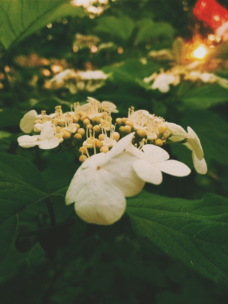 flower, petal, beauty in nature, freshness, fragility, nature, plant, growth, no people, flower head, close-up, leaf, outdoors, blooming, day