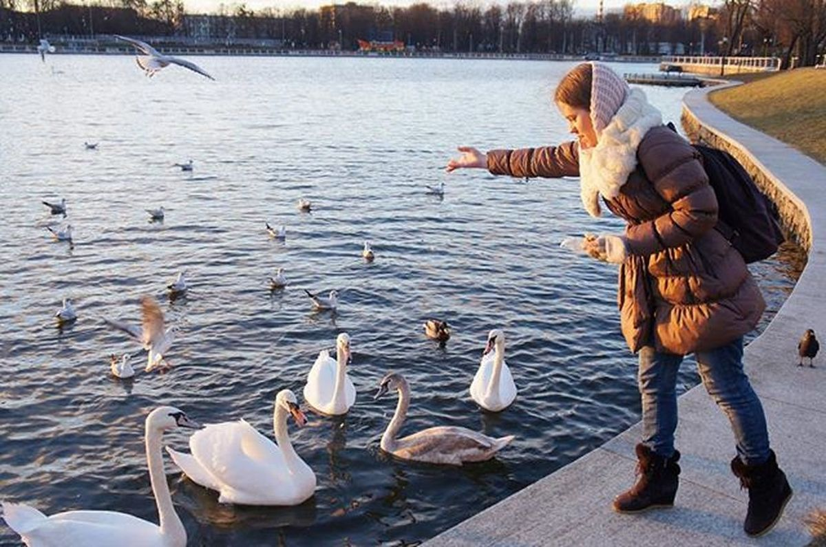 Наглые красавцы)) калининград Kaliningrad Vscorussia Vscoarchitecture Architecture Königsberg лебеди Чайка