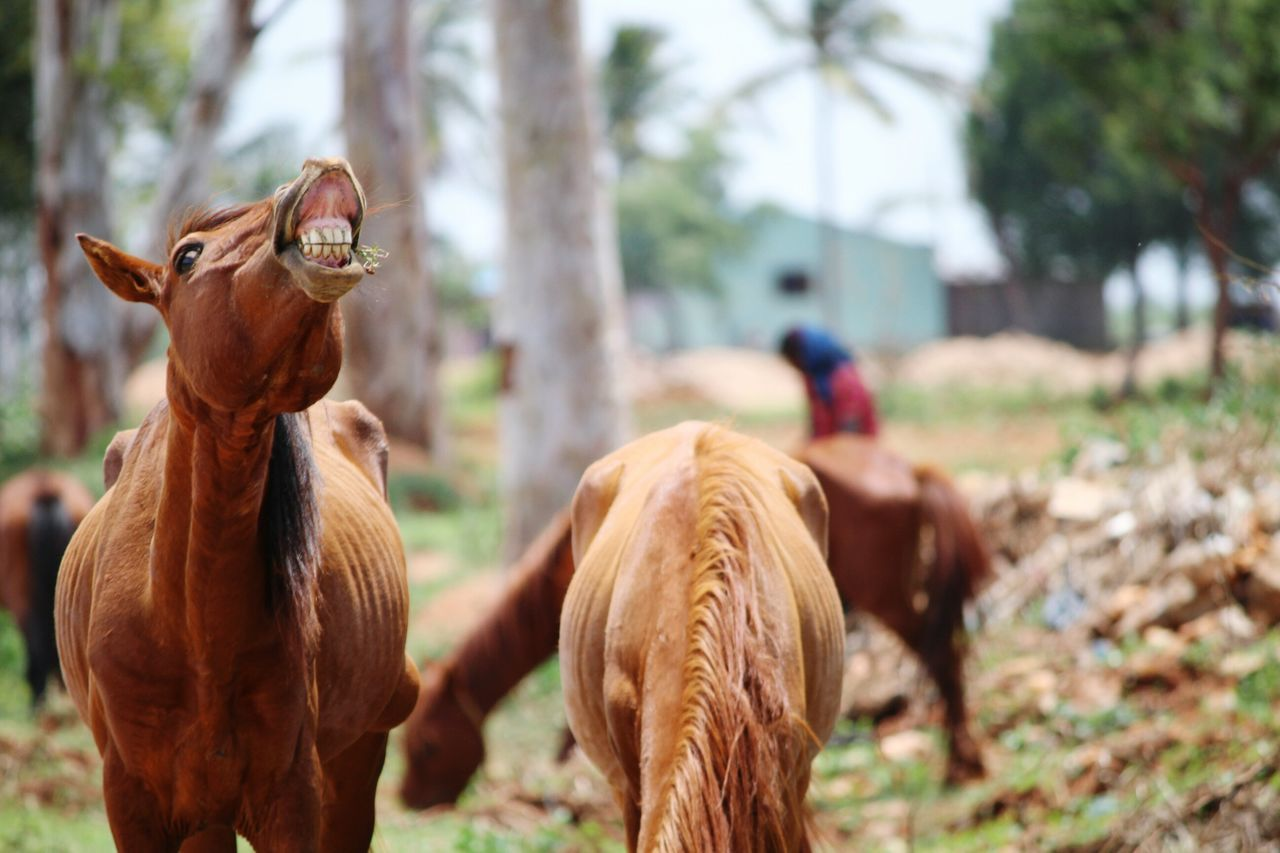 Animal Horselover Livestock One Animal Domestic Animals Mammal Brown Outdoors Tree Rural Scene Day Animal Themes Nature No People Horses Horselovers Horse Smiling Horse Photography  Horse Grazing Horse HORSE LAUGHING Horse In Field Brown Hair Brown Animal Brown Horse Preety Horse say cheese